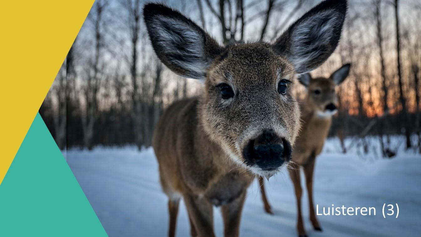 Actief luisteren - Hert dichtbij met grote oren