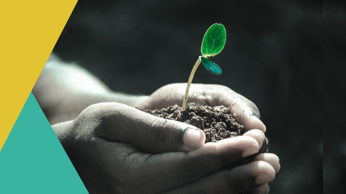 Compliment - handen met grond en daarin een klein plantje